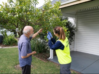 Spring fruit provides breeding ground for problem pest in western suburbs